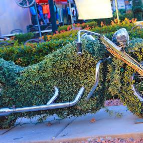 Motor Cycle by Vikram Mehta - Artistic Objects Technology Objects ( bike, green, art, street, motor cycle, leaves )