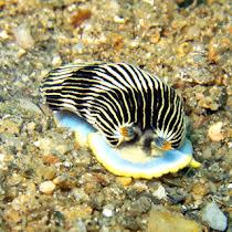 Romblon Marine Biodiversity