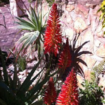 Aloes of Southern Africa