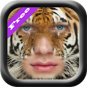 Animal Face Morph