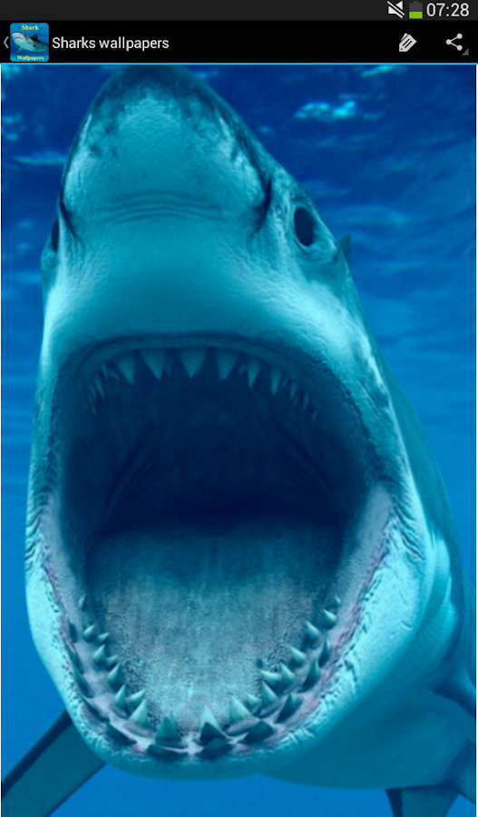 Shark Wallpapers Android Apps on Google Play