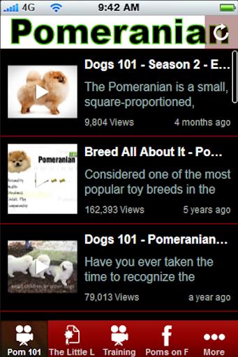 Pomeranian +
