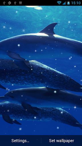 돌고래 라이브 배경 화면