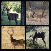 Big Buck Live Wallpaper