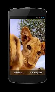 Lion cub live wallpaper 3D