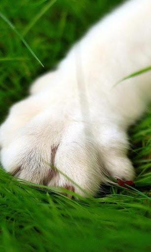 白色的猫壁纸