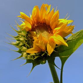 by Rita Bugiene - Flowers Single Flower (  )