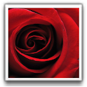 Rose of Love Wallpapers logo