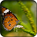 Butterfly 3d Wallpapers icon
