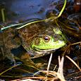 Frolicking Frogs, Tumbling Turtles of Kentucky