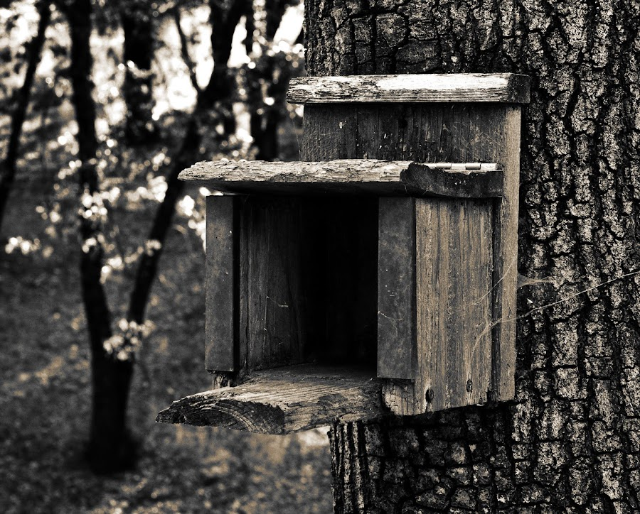 Squirrel Feeder by Kerry Bruton - Black & White Objects & Still Life