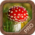 Mushrooms PRO - NATURE MOBILE icon