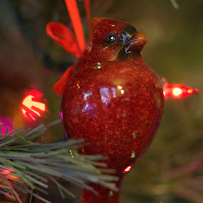 by Terry Hairston - Public Holidays Christmas ( bird, red bird, cardinal, decoration, ornament, christmas )