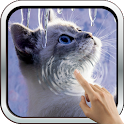 Interactive Kitten icon