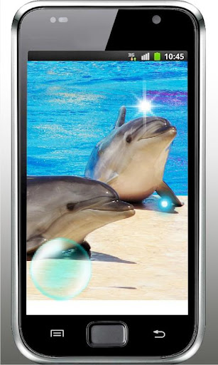 Dolphines Gallery HQ LWP