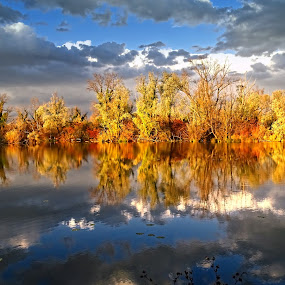 Autumn  by Tihomir Beller - Landscapes Forests ( forrest, seasons, autumn, fall, leaves, woods )