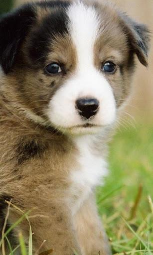 玩生活App|可愛的小狗壁紙免費|APP試玩