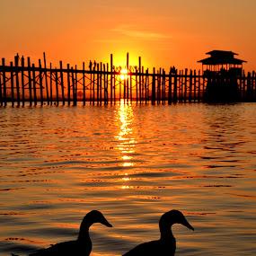 Ducking around by Matt Hulland - Landscapes Sunsets & Sunrises ( mandalay, myanmar, sunset, beautiful, ducks, u-bein bridge )