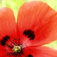 Greek Flora mission