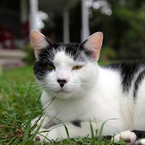 by Ian  Rivera - Animals - Cats Portraits