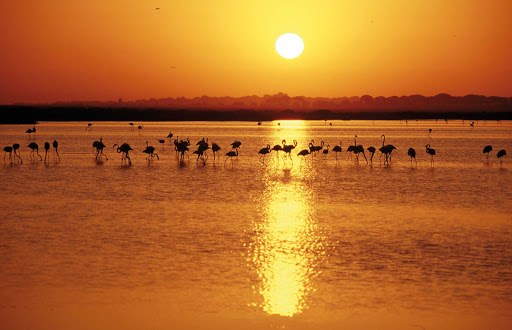 Donana-National-Park-Huelva-Andalusia-Spain - Doñana National Park in the province of Huelva in the Andalusia region is home to some of Spain's most ecologically sensitive wildlife areas.