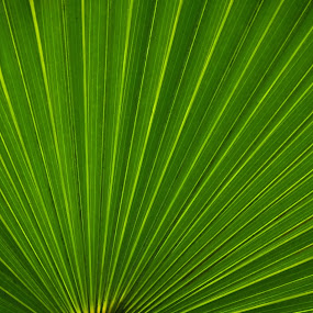 Palm Leaf by Judy Dean - Nature Up Close Leaves & Grasses ( palm, green, leaf,  )