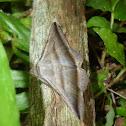 Moth Camouflaged