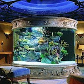 Fish Aquarium Ideas
