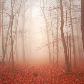 Red Carpet by Aaron Shaver - Landscapes Forests ( mountain, mood, forest, landscape, morning, woods, rural, foggy, winter, red, nature, autumn, fog, fall, trail, path, trees, light, mist )