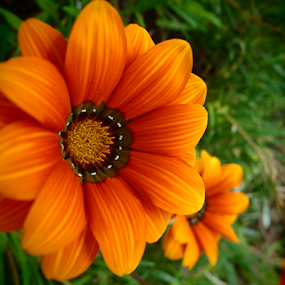 by Theodoros Theodorou - Flowers Flower Gardens ( orange, argaka, garden, cyprus,  )