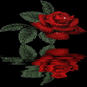 Reflective Red Rose Live Wallpaper