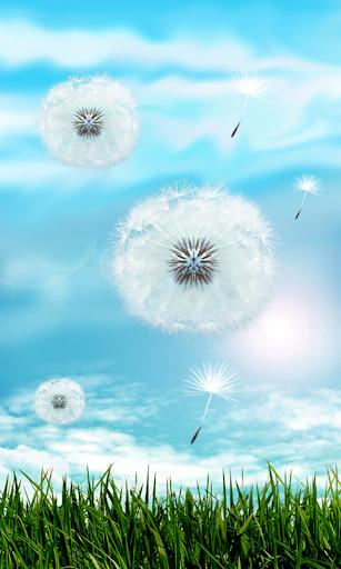 Blue Sky Dandelion HD