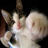 猫パンチをよけろ!