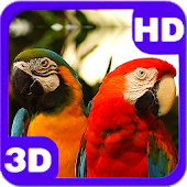 Beautiful Parrots Couple 3D