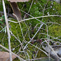 North American Peat Moss