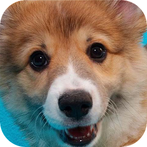 Apps apk Puppy Sound Dog Bark Sound  for Samsung Galaxy S6 & Galaxy S6 Edge