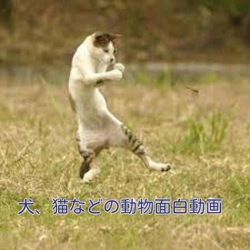 犬猫などの動物面白動画