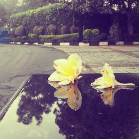 Yellow flower by Rully Kustiwa - Instagram & Mobile Instagram ( instagram, instagramindonesia, instafoto, djuraganutju, bogor, flower, yellow,  )