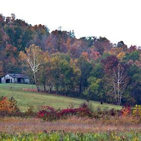 Kentucky Autumn by William Stewart - Landscapes Mountains & Hills ( hills, fall colors, horses, woods, kentucky, nature, barn, autumn, fall, outdoors, trees, scenery, landscapes, color, colorful )