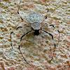 Coin Spider