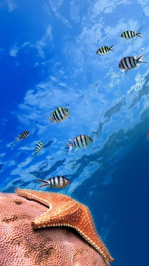 Ocean Fish Live Wallpaper- screenshot