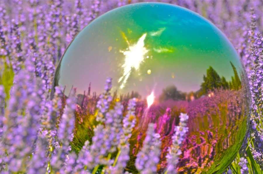 Bright and cheery lavender reflection on a garden globe.  Photo by Janet Young-abeyta~ 7/12/2014 by Janet Young- Abeyta - Artistic Objects Glass ( #GARYFONGDRAMATICLIGHT, #WTFBOBDAVIS,  )