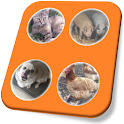 Pet Stroking Demo icon