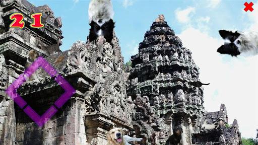 隐藏的物体高清:猫与狗在亚洲