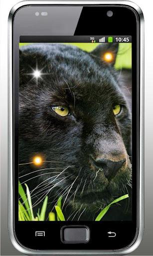 Jungle Panthera live wallpaper
