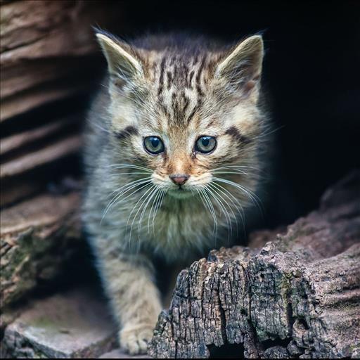 Katze Hintergrundbilder Android Apps Auf Google Play