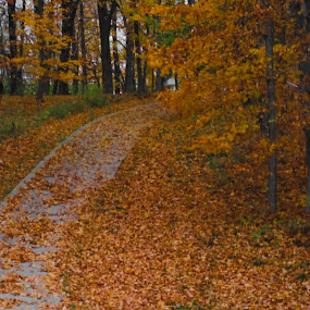 by Maureen McDonald - Novices Only Landscapes ( kentucky. leaves, serenity, fall, park drive, quiet, , color, colorful, nature, path, landscape )