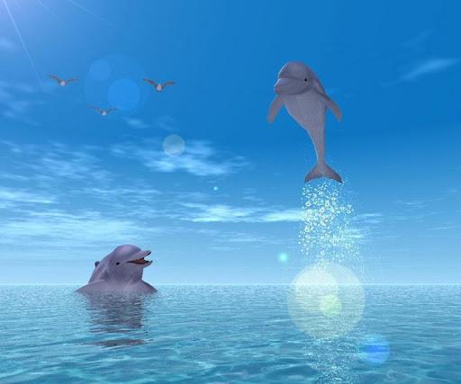 【免費娛樂App】3D Dolphin-APP點子