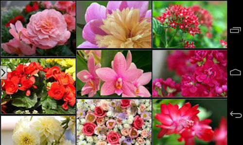 Beautiful Flowers Wallpapers screenshot 11