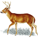 Deer Call logo